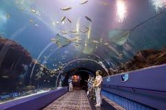Interior de Georgia Aquarium con la gente Fotos de archivo