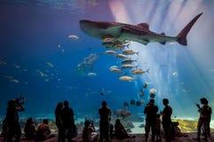Interior de Georgia Aquarium con la gente Fotos de archivo libres de regalías