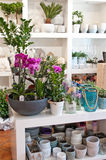 Interior de la floristería Fotografía de archivo libre de regalías
