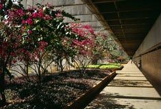 Interior de la universidad del Brasil Fotografía de archivo