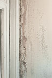 Interior decay. Mould and wood rot on a window frame and wall Royalty Free Stock Image