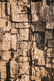 Interior of a decaying wood trank. Close-up. Royalty Free Stock Photography