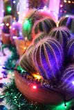 Christmas lights on a a display of cacti. Interior decor display of cactis with Christmas lights stock photos