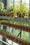 Interior del invernadero para las flores y las plantas crecientes Mercado para las plantas de la venta Muchas plantas en potes Imagen de archivo libre de regalías