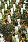 Interior del invernadero para las plantas y el cactus crecientes Mercado para las plantas de la venta Muchas plantas en potss Fotos de archivo