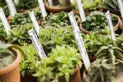 Interior del invernadero para las plantas y el cactus crecientes Mercado para las plantas de la venta Muchas plantas en potss Imagen de archivo libre de regalías
