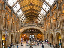 Interior del museo de la historia natural Fotos de archivo libres de regalías