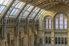 Interior del museo de la historia natural, Londres Imágenes de archivo libres de regalías