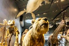 Interior 7 del museo de la historia natural de Shangai fotos de archivo libres de regalías
