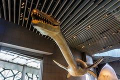 Interior 5 del museo de la historia natural de Shangai imagen de archivo libre de regalías