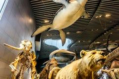 Interior 6 del museo de la historia natural de Shangai foto de archivo libre de regalías