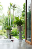 Interior design decoration with tree potted plants. In green garden Stock Photography