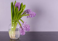 Interior design with lilac wall and purple flower Royalty Free Stock Images