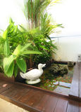 Interior design - pond. Pond water with plants and timber decking Stock Image