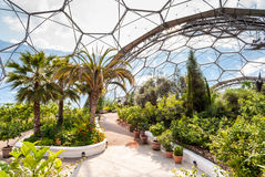 Interior do bioma mediterrâneo, Eden Project Fotografia de Stock Royalty Free