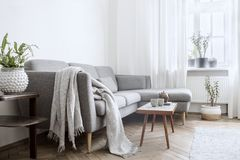 Interior escandinavo elegante de la sala de estar con la peque?os tabla, sof?, l?mpara y shelfs del dise?o Paredes blancas, plant imagen de archivo libre de regalías