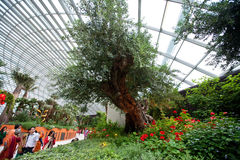 Interior of Flower Dome in Gardens by the Bay, SINGAPORE Stock Photo