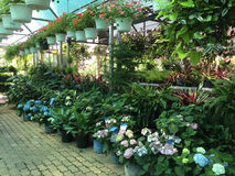Interior of flower store Royalty Free Stock Image