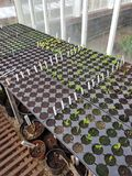 Interior of a garden greenhouse with seedlings. Stock Photos