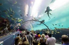 Interior of Georgia Aquarium with the people Stock Image