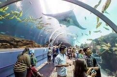 Interior of Georgia Aquarium with the people Royalty Free Stock Photos