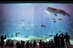 Interior of Georgia Aquarium with the people Royalty Free Stock Photos