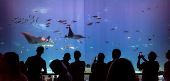 Interior of Georgia Aquarium with the people Stock Photography