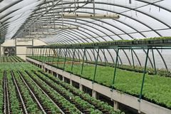 Interior of a greenhouse for growing plants Royalty Free Stock Images