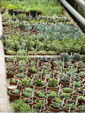 Interior of greenhouse for growing plants and cactus. Market for sale plants. Many plants in potss Royalty Free Stock Photos
