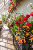 Interior of greenhouse with a variety of flowers Royalty Free Stock Photos