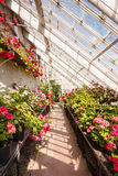 Interior of greenhouse with a variety of flowers Royalty Free Stock Images