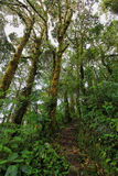 Interior of humid cloudforest Royalty Free Stock Photo