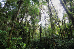 Interior of humid cloudforest. Between Antisana and Sumaco Reserve, Ecuador Royalty Free Stock Photography