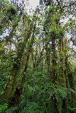 Interior of humid cloudforest Stock Photo