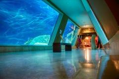 The interior of Istanbul Sea Life Aquarium TurkuaZoo. ISTANBUL, TURKEY – JULY 11, 2014:  The interior of Istanbul Sea Life Aquarium TurkuaZoo. The entrance to Stock Image