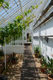 Interior of a large garden greenhouse. Royalty Free Stock Image
