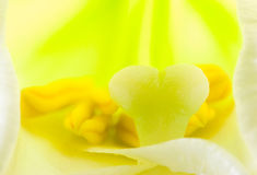 Interior of  lily flower Stock Images