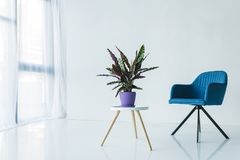 interior of living room in minimalistic design with armchair and calathea lancifolia plant in pot stock photos