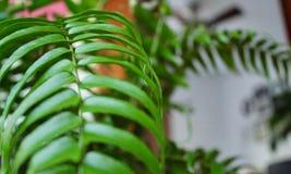 Interior macro da planta verde da samambaia foto de stock