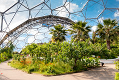 Interior of Mediterranean biome, Eden Project. Interior of Mediterranean biome, Eden Project, Cornwall, UK showing hexagonal structure of dome Royalty Free Stock Images