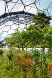 Interior of Mediterranean biome, Eden Project, vertical. Interior of Mediterranean biome, Eden Project, Cornwall, UK showing hexagonal structure of dome royalty free stock photos