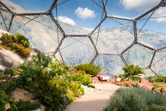 Interior of Mediterranean biome, Eden Project. Interior of Mediterranean biome, Eden Project, Cornwall, UK showing hexagonal structure of dome with surrounding Stock Photo