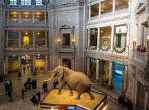 Interior of The National Natural History Museum of the Smithsonian Institution - Washington, D.C., USA Royalty Free Stock Photos