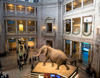Interior of The National Natural History Museum of the Smithsonian Institution - Washington, D.C., USA Stock Images