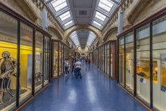 Interior, Natural History Museum, London Royalty Free Stock Image