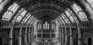 Interior of the Natural History Museum of London stock images