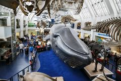 Free Interior Of The Museum Of Natural History, London Stock Photo - 110090400