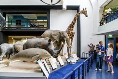 Free Interior Of The Museum Of Natural History, London Stock Image - 110129991