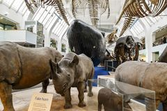 Free Interior Of The Museum Of Natural History, London Stock Photo - 110567980