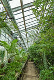 Interior of old tropic greenhouse Royalty Free Stock Photography